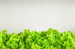 Fresh lettuce leaves border over grey ceramic kitchen backsplash. Organic vegetable food, diet concept. Plenty of copy space royalty free stock photos
