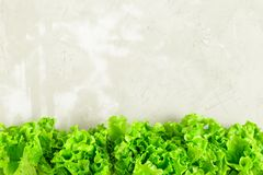 Fresh lettuce leaves border over grey concrete. Stone background. Organic vegetable food, diet concept. Plenty of copy space Stock Photo