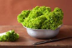 Fresh lettuce leaves in bowl Royalty Free Stock Image