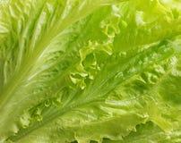 Fresh lettuce leaves. Stock Photo