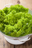 Fresh lettuce leaves in colander Royalty Free Stock Photography
