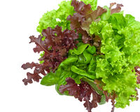 Fresh lettuce leaves of different types isolated on a white back Royalty Free Stock Images