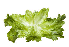 Fresh lettuce leaves Stock Photos