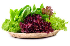 Fresh  lettuce leaves isolated on white Royalty Free Stock Photography