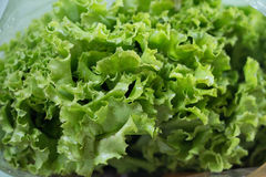 Fresh lettuce leaves Royalty Free Stock Image
