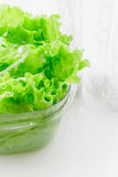 Fresh lettuce leaves soaked in transparent plastic bowl Royalty Free Stock Image