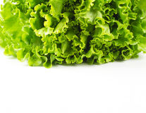 Fresh lettuce leaves. Royalty Free Stock Photos