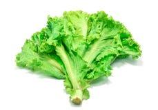 Fresh Lettuce leaves on white background. Stock Images