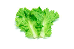 Fresh Lettuce leaves on white background. Royalty Free Stock Photos