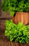 Fresh lettuce leaves in a wicker basket Stock Photography