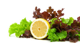 Fresh lettuce and lemon on a white background Royalty Free Stock Images