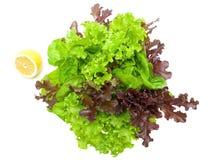 Fresh lettuce and lemon on a white background closeup Stock Image