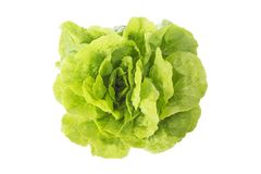 Fresh lettuce with lots of green leaves in natural settings on white background. Fresh lettuce with lots of green leaves in natural settings on white Stock Image