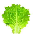 Fresh Lettuce / one leaf isolated on white Royalty Free Stock Images