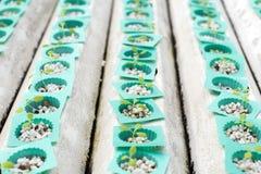 Fresh lettuce in Organic hydroponic vegetable cultivation farm Stock Photo