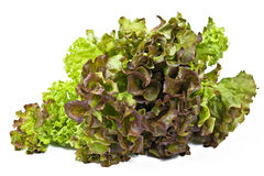 Fresh lettuce over white. Fresh green and brown lettuce isolated over white Stock Images