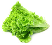 Fresh lettuce over white background Royalty Free Stock Image