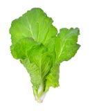 Fresh lettuce over on white background Stock Photos