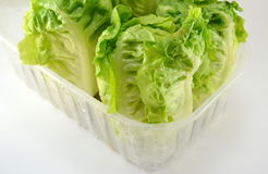 Fresh lettuce plant Royalty Free Stock Photo