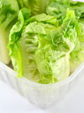 Fresh lettuce plant Stock Photos