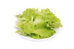 Fresh lettuce on plate close up. Stock Image