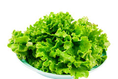 Fresh lettuce. On a plate isolated on white background Stock Images