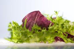 Fresh lettuce with radiccio sallet Stock Photos