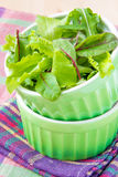 Fresh lettuce and rucola in the green cup Royalty Free Stock Image