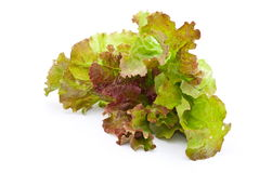 Fresh lettuce salad. On white Royalty Free Stock Photography