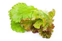 Fresh lettuce salad Stock Photos