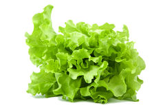 Fresh lettuce salad isolated Royalty Free Stock Images