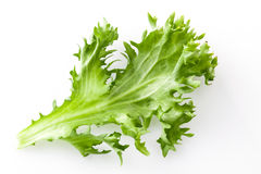 Fresh lettuce salad isolated Stock Photo