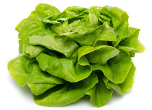 Fresh lettuce salad Royalty Free Stock Photography