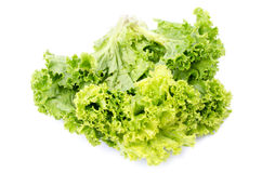 Fresh lettuce salad leaves bunch Royalty Free Stock Image