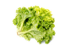 Fresh lettuce salad leaves bunch Royalty Free Stock Photos