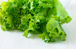 Fresh lettuce salad leaves bunch Stock Image
