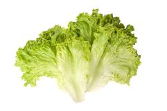 Fresh lettuce salad leaves. Organic food isolated on the white background stock images