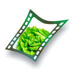 fresh lettuce salad snapshot Royalty Free Stock Photos