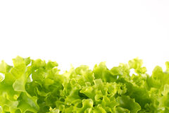 Fresh lettuce on a white background. Green lettuce - looking like grass - isolated on white Royalty Free Stock Image