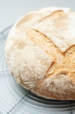 Fresh levain bread Royalty Free Stock Photography