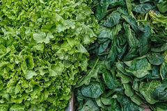 Fresh light-green lettuce leaves and darkly green leaves of spin. Ach which are on sale in the vegetable market Royalty Free Stock Photo