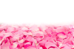 fresh light pink rose petal background with water rain drop Royalty Free Stock Photography