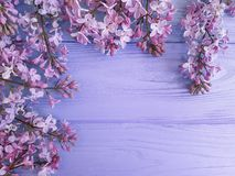 Fresh lilac design on a violet april decorate wooden background, frame fragrant. Fresh lilac on a violet wooden background, fragrant design decorate april Stock Photo