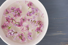Fresh lilac flower petals floating on water in the white ceramic bowl on blue painted background. Stock Photo