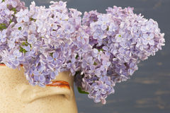 Fresh lilac flowers in the beige  ceramic pot against blue background. Royalty Free Stock Photos