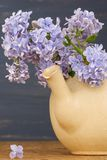 Fresh lilac flowers in the beige tea pot against blue background. Royalty Free Stock Images