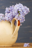 Fresh lilac flowers in the beige  tea pot against blue background. Royalty Free Stock Photo