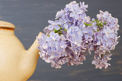 Fresh lilac flowers in a beige tea pot over blue background. Royalty Free Stock Images