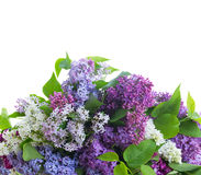 Fresh lilac flowers Royalty Free Stock Image