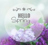 Fresh lilac flowers Royalty Free Stock Photography